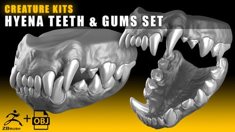 CREATURE KITS: Hyena Teeth & Gums - High Poly OBJ File / ZBrush File with Subdivisions