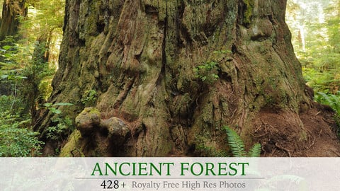 Ancient Forest Photo Pack
