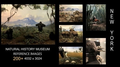 200+ Reference Images: NATURAL HISTORY MUSEUM