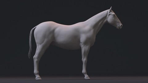 Realistic Horse