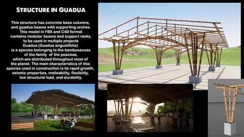 Structure in Guadua