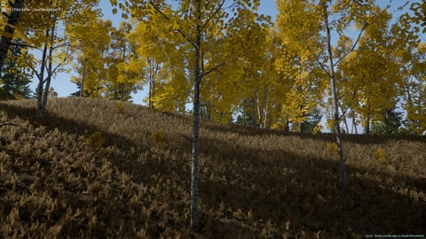 Realistic Forest Pack - Unreal Engine 4