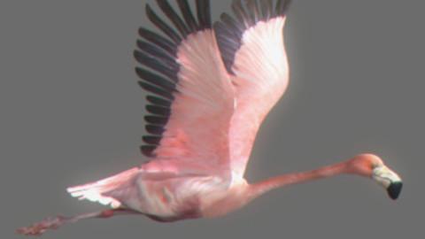 Animated Flamingo