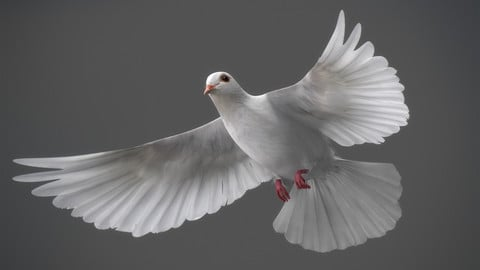 Animated White Dove