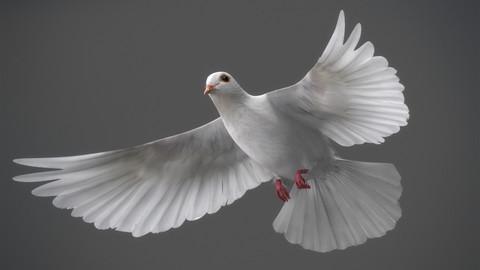 Animated White Dove