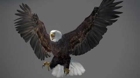 Animated Bald Eagle
