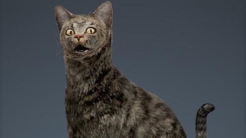 Rigged Domestic Cat