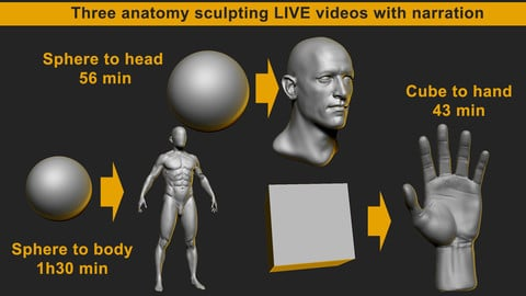 Anatomy sculpting live in Zbrush - Hand, Head and whole body from primitives
