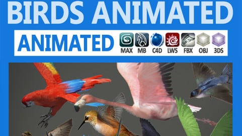 Pack – Birds Animated