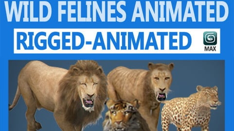 Pack – Wild Felines Animated