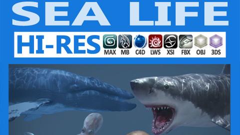 Pack – Sea Life