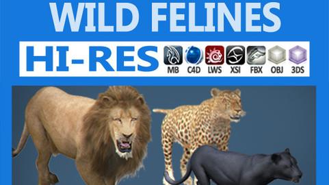 Pack – Wild Felines
