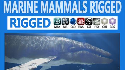 Pack – Marine Mammals