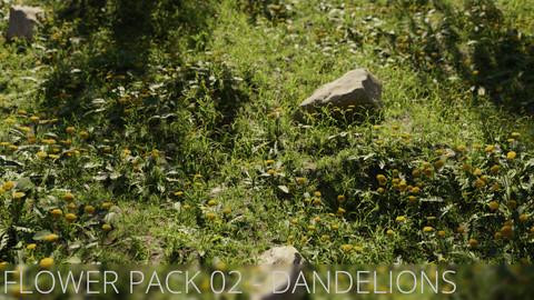 3D Flower Pack 02 - Dandelions