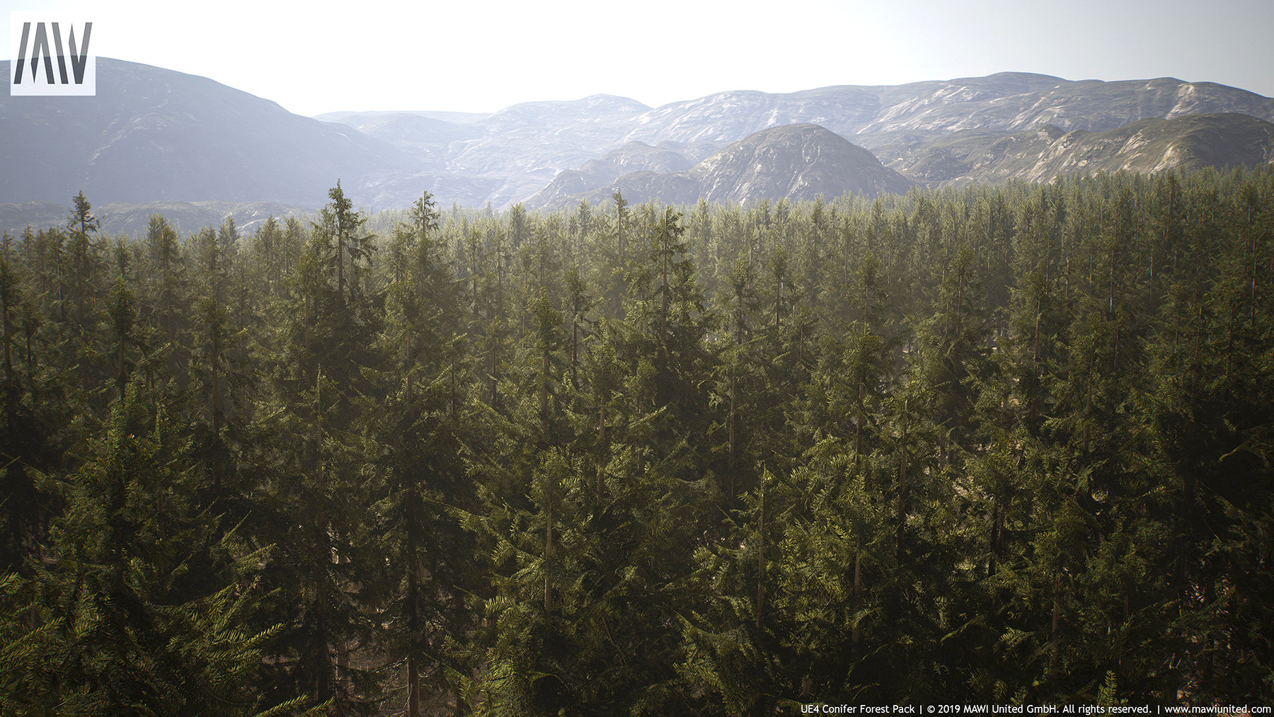 Willi Hammes - UE4 - CONIFER FOREST PACK