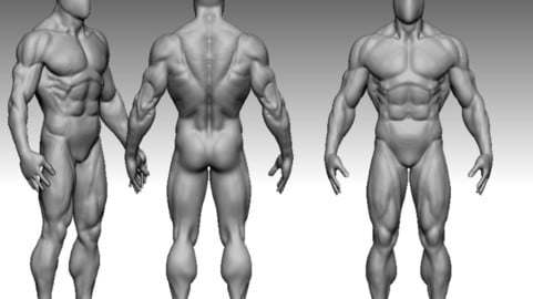 bodybuildere anatomy