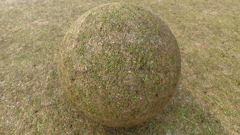 Grass (212) - Photogrammetry based Environment Texture