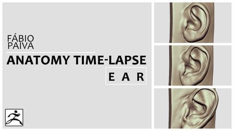 Anatomy Time-Lapse: Ear