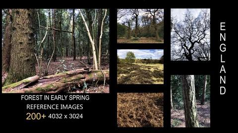250+ Reference Images: English Woodland