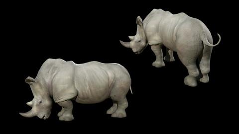 Kirarito Rhino