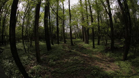 Example of wooded area in mid day.