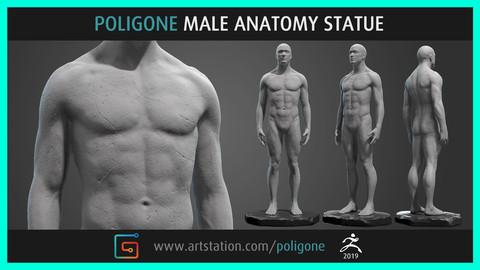 Poligone Male Anatomy Statue