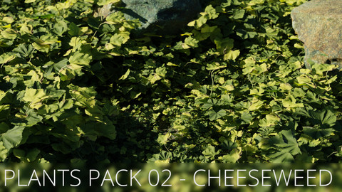 3D Plants Pack 02 - Cheeseweed