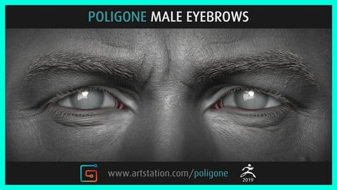 Poligone Male Eyebrows