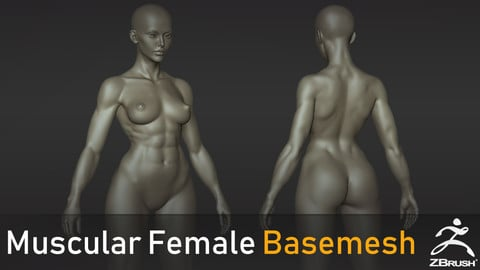 Muscular Female Basemesh