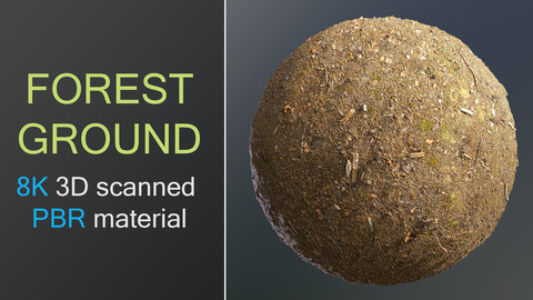 Forest ground 8K 3D photoscanned material