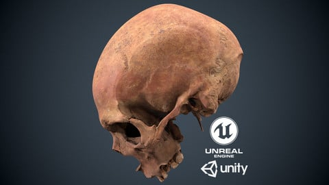 Real Human Skull Low-poly 3D model