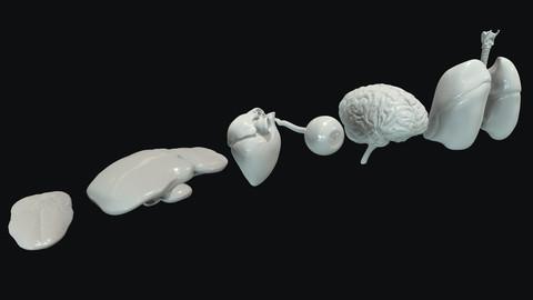 Human Internal Organs Base Meshes Collection