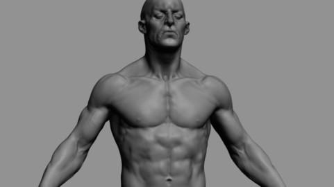 Male Anatomy 02