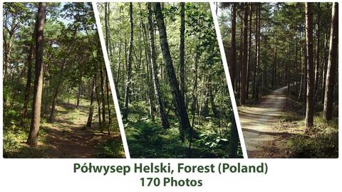 Forest - Półwysep Helski, Europe(170 Photos)