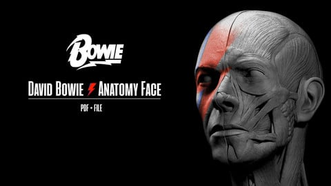 David Bowie Face Anatomy - Ecorche PDF + FILE