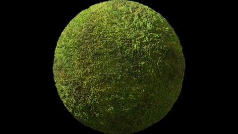 73. Moss#01