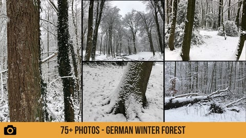 German Winter Forest - 75+ Photos