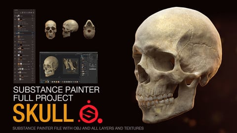 Human Skull - Substance Painter File