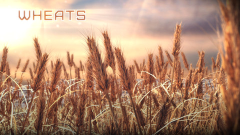 Grass | Wheat field props