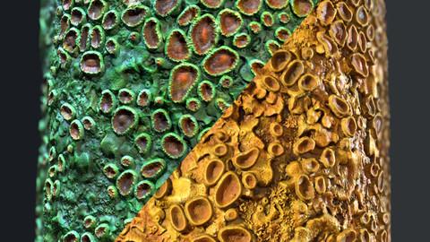 Lichen Material