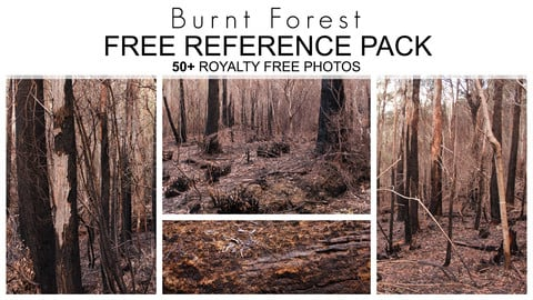 Free Reference Pack - Burnt Forest - 50+ Royalty Free Photos