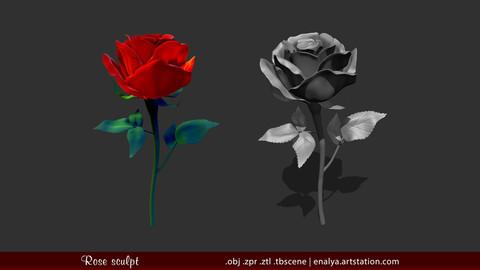 Rose (3D sculpt)