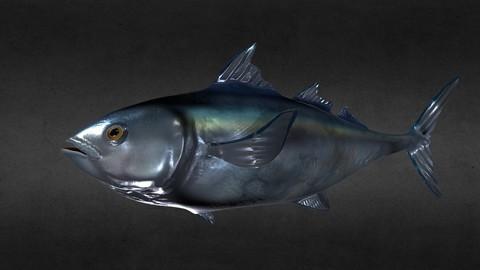 3D Model Bluefin Tuna