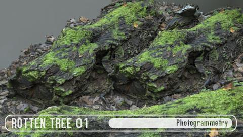 Rotten Tree 01