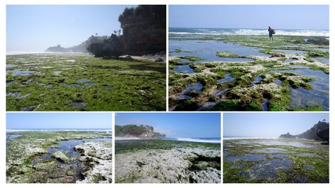 Kukup Beach - Low Tide Beach in Southeast Asia