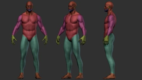 Zbrush Human BaseMesh - Include Polygroups & UVs