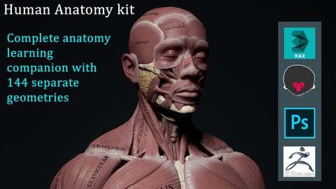 Human Anatomy Kit