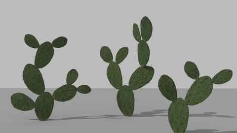 Nopal (Desert Plant)