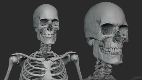 Male skeleton sculpt