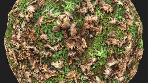 Ground With Grass And Leaves Material Pack